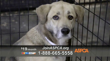 ASPCA TV Spot, 'Prevention of Cruelty to Animals Month' - Thumbnail 6