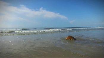 South Carolina Aquarium TV Spot, 'Become a Sea Turtle Guardian' - Thumbnail 3