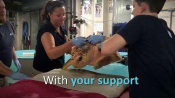South Carolina Aquarium TV Spot, 'Become a Sea Turtle Guardian' - Thumbnail 4