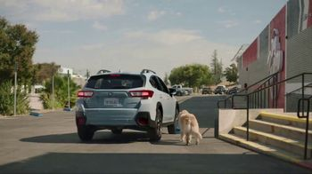 Subaru TV Spot, 'Dog Tested: Drive Away' [T1] - Thumbnail 4