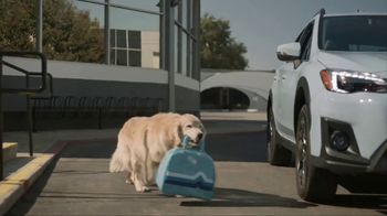 Subaru TV Spot, 'Dog Tested: Drive Away' [T1] - Thumbnail 5