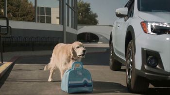 Subaru TV Spot, 'Dog Tested: Drive Away' [T1] - Thumbnail 6