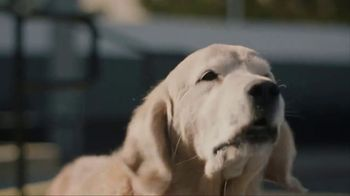 Subaru TV Spot, 'Dog Tested: Drive Away' [T1] - Thumbnail 7