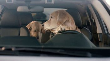 Subaru TV Spot, 'Dog Tested: Drive Away' [T1] - Thumbnail 8