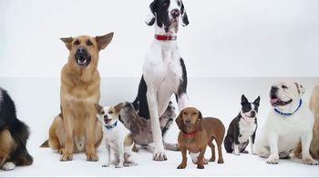 PetSmart TV Spot, 'New Brands'