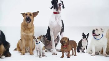 PetSmart TV Spot, 'New Brands'