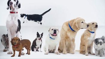 PetSmart TV Spot, 'New Brands' - Thumbnail 3