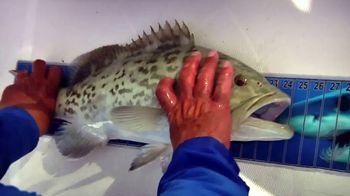 King Sailfish Mounts TV Spot, 'Replica' - Thumbnail 2