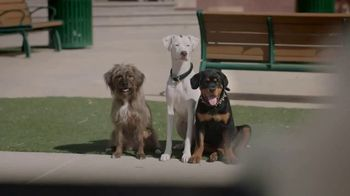 Subaru TV Spot, 'Dog Tested: Drop Off' [T1] - Thumbnail 2