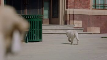 Subaru TV Spot, 'Dog Tested: Drop Off' [T1] - Thumbnail 7