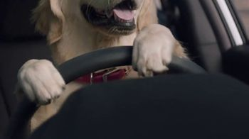 Subaru Impreza Sport TV Spot, 'Dog Tested: Driving Lesson' [T1] - Thumbnail 4