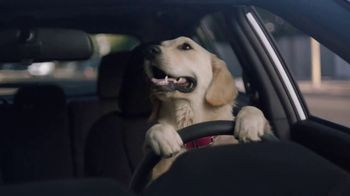 Subaru Impreza Sport TV Spot, 'Dog Tested: Driving Lesson'