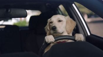 Subaru Impreza Sport TV Spot, 'Dog Tested: Driving Lesson' [T1] - Thumbnail 8