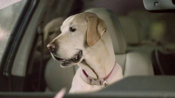 Subaru Ascent TV Spot, 'Dog Tested: Car Wash' [T1] - Thumbnail 5