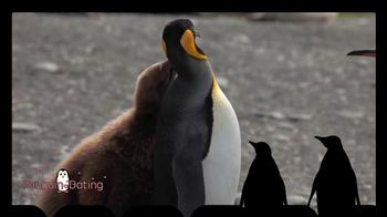iSpot.tv TV Spot, 'Penguin Dating' - Thumbnail 2