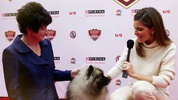 Purina TV Spot, 'Beverly Hills Dog Show' - 3 commercial airings
