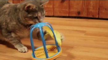 Flutter Frenzy TV Spot, 'Simulated Bird Toy' - Thumbnail 3