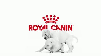 Royal Canin TV Spot, 'Tailored Nutrition for Your Growing Puppy' - Thumbnail 1