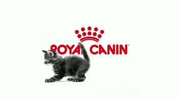 Royal Canin TV Spot, 'Tailored Nutrition for Your Growing Kitten' - Thumbnail 1