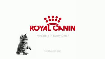 Royal Canin TV Spot, 'Tailored Nutrition for Your Growing Kitten' - Thumbnail 10