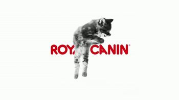 Royal Canin TV Spot, 'Tailored Nutrition for Your Growing Kitten' - Thumbnail 2