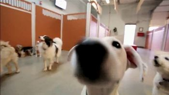 Camp Bow Wow TV Spot, 'The Camp Bow Wow Difference' - Thumbnail 3