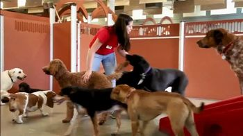 Camp Bow Wow TV Spot, 'The Camp Bow Wow Difference' - Thumbnail 7