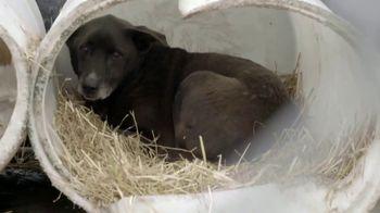 ASPCA TV Spot, 'Hope of a New Year' - Thumbnail 2