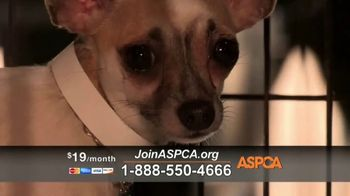 ASPCA TV Spot, 'Hope of a New Year'