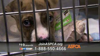 ASPCA TV Spot, 'Hope of a New Year' - Thumbnail 9