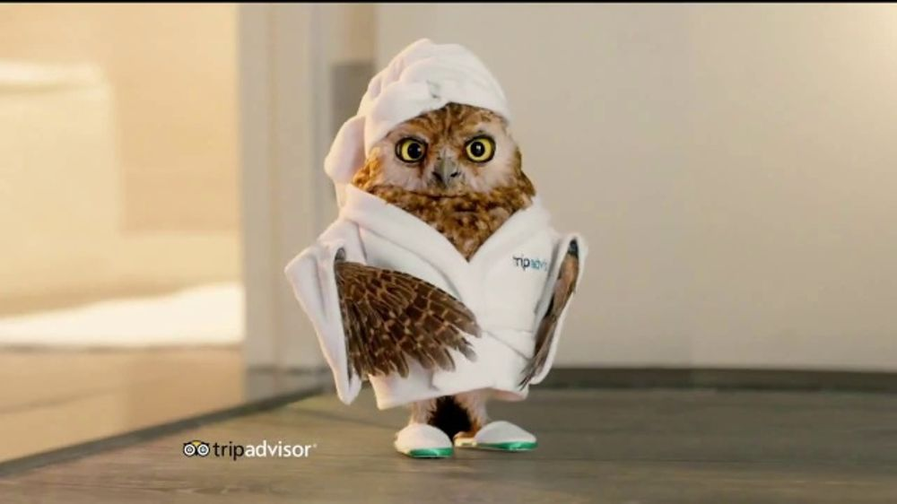 Tripadvisor Tv Commercial Early Bird Ispot Tv