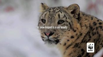 World Wildlife Fund TV Spot, \'Snow Leopards Are Being Killed\'