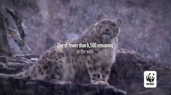 World Wildlife Fund TV Spot, 'Snow Leopards Are Being Killed' - Thumbnail 2