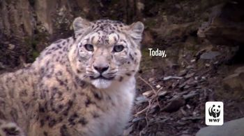 World Wildlife Fund TV Spot, 'Snow Leopards Are Being Killed' - Thumbnail 4