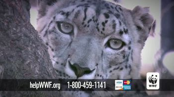 World Wildlife Fund TV Spot, 'Snow Leopards Are Being Killed' - Thumbnail 7
