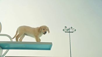 Pedigree TV Spot, \'Pup-letes: Diving\'