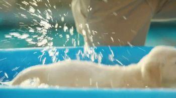 Pedigree TV Spot, 'Pup-letes: Diving' - Thumbnail 5