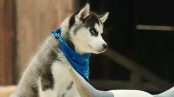 Pedigree TV Spot, 'Pup-letes: Stamina' - Thumbnail 5