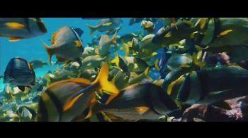 Atlantis TV Spot, 'Endless Flow: February' - Thumbnail 5