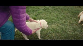 Canine Companions for Independence TV Spot, 'The Graduate' - Thumbnail 2
