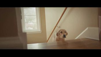 Canine Companions for Independence TV Spot, 'The Graduate' - Thumbnail 3