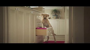 Canine Companions for Independence TV Spot, 'The Graduate' - Thumbnail 4
