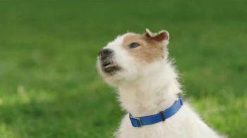 BMO Harris Bank Bulls Debit Mastercard TV Spot, 'Souvenir: Chew Toy' - Thumbnail 4