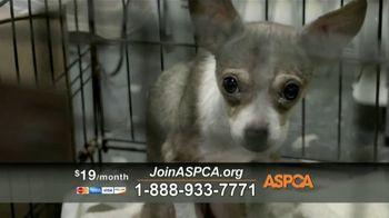 ASPCA TV Spot, 'Charlotte' - Thumbnail 6