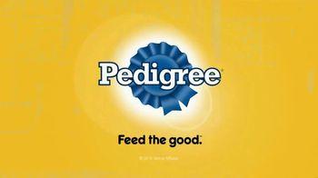 Pedigree TV Spot, 'Learning to Swim' - Thumbnail 10