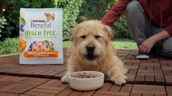 Purina Beneful Grain Free TV Spot, 'Superfoods' - Thumbnail 3