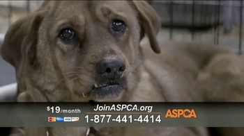 ASPCA TV Spot, 'Unbelievable' Featuring Eric McCormack