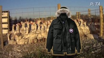 PETA TV Spot, 'Canada Goose Doesn't Want You to See This'