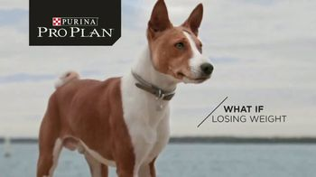 Purina Pro Plan Simply Fit TV Spot, 'Pet Weight Loss: Not a Losing Battle'