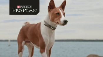 Purina Pro Plan Simply Fit TV Spot, 'Pet Weight Loss: Not a Losing Battle' - Thumbnail 1